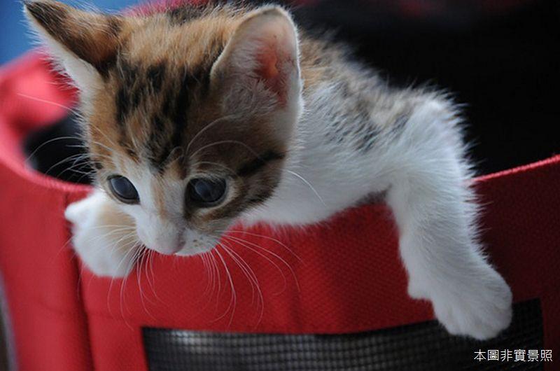 《高雄寵物》米妮美樂寵物沙龍