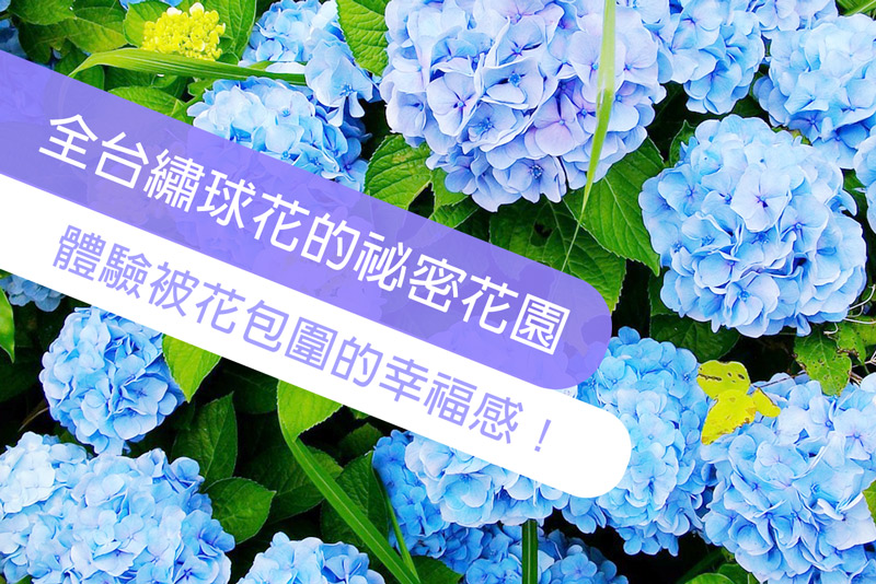 全台三處屬於繡球花的祕密花園,炎炎夏日也要手刀衝去,體驗被繡球花包圍的幸福感!