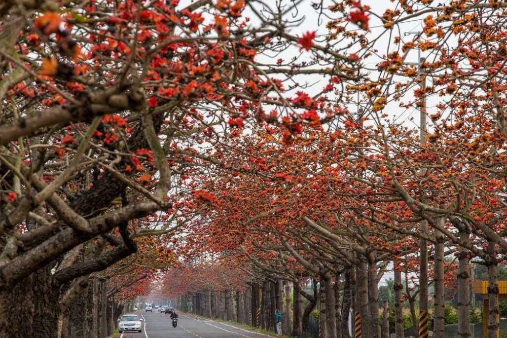 滿城浪漫花海好吸睛 台南當季賞花景點報你知